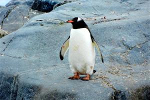 Gerede: Der Pinguin-Effekt
