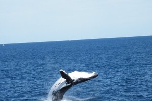 Oz: Whale Watching
