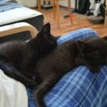 [Sleeping cats]
