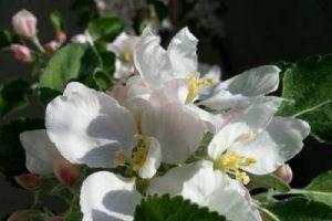 Explosiver Frühling und wunderbare Wissenschaft