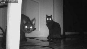 Katzen in der Nacht