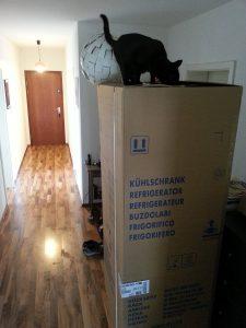 [Kühlschrank mit Katze drauf]
