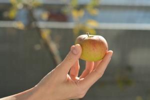 PS: 2018 KW 37 – Der erste Apfel
