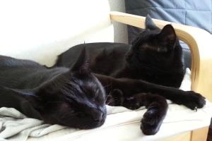 2018 KW 35 – Katzen, Motten und Kedgeridoo