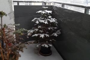 2018 KW 51 – Weihnachtsmarkt, Gelbwesten, Relotius und Eliza Dushku