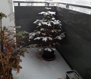 Schnee auf Weihnachtsbaum