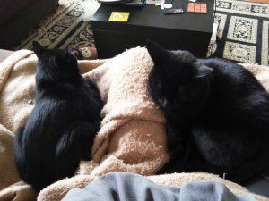 Wrex und Garrus auf der Couch