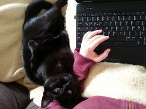 Kater und Laptop