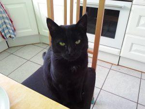 Schwarze Katze auf Stuhl