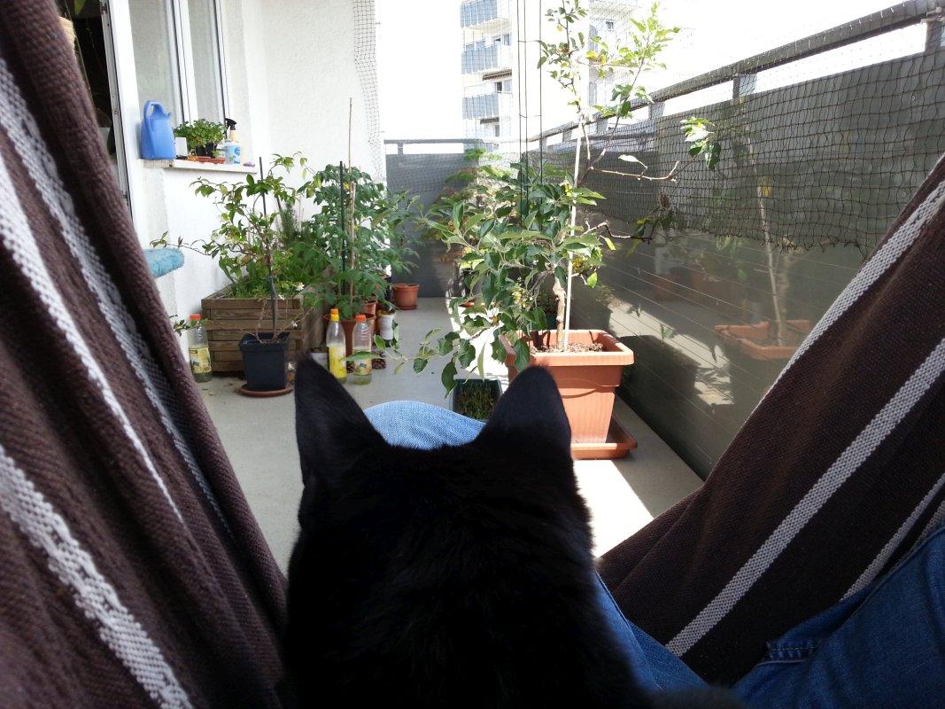 Hängesessel und Katze