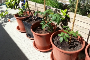 2019 KW 22 – Tomaten, Oldtimer und kalter Kaffee