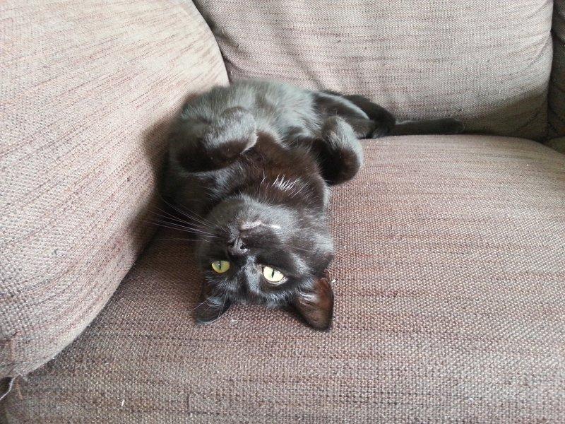 Kater auf Sofa