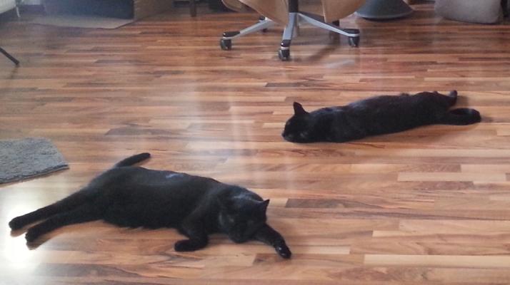 Kater liegen auf dem Boden