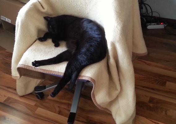 Kater auf Stuhl