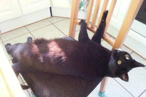 2019 KW 34 – Artikel, Mobilität und Katzen