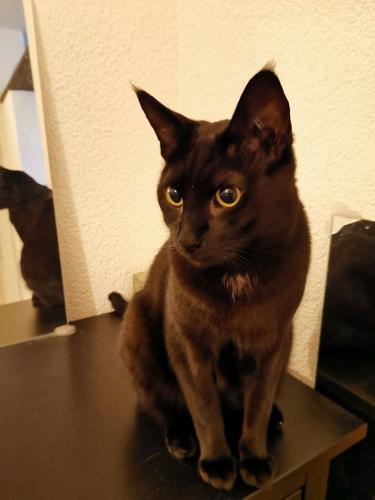 Katze auf Möbelstück