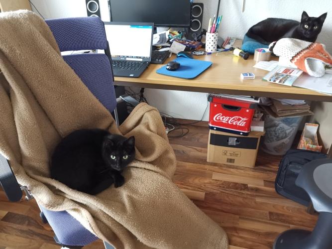 Katzen Stuhl