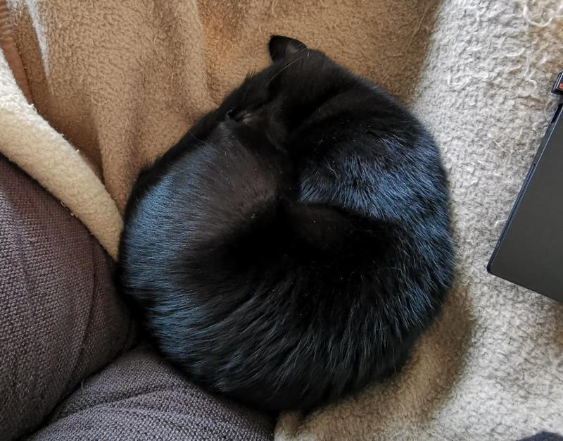 Zusammengerollte Katze