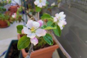 2020 KW 15 – Sticken, Apfelbäume und der Mars