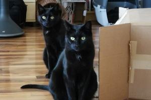 2020 KW 17 – Pakete, Grapefruitbier und Katzen