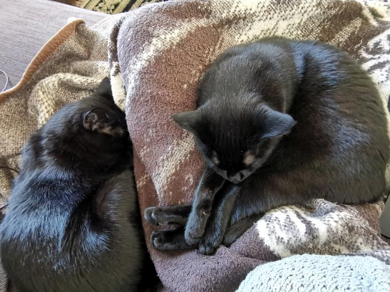 Katzen schlafend