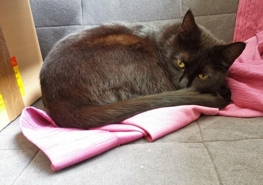 Schwarze Katze auf Vorhang