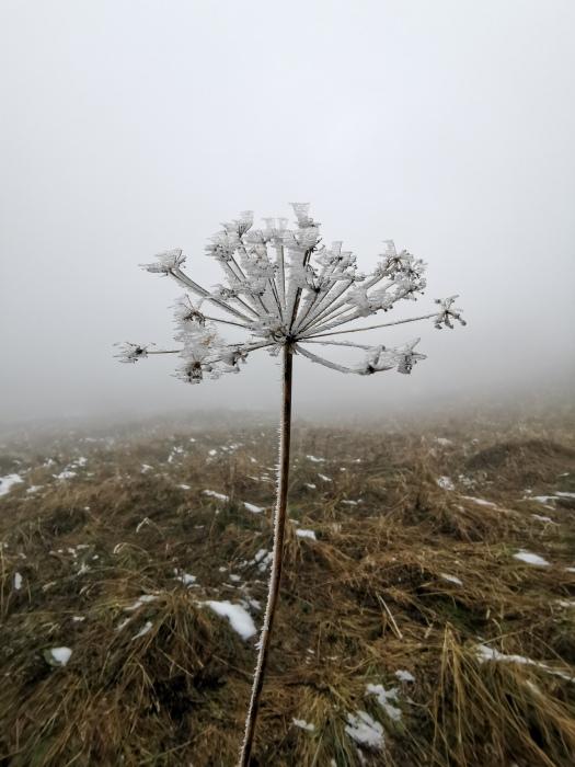Eingefrorene Pflanze