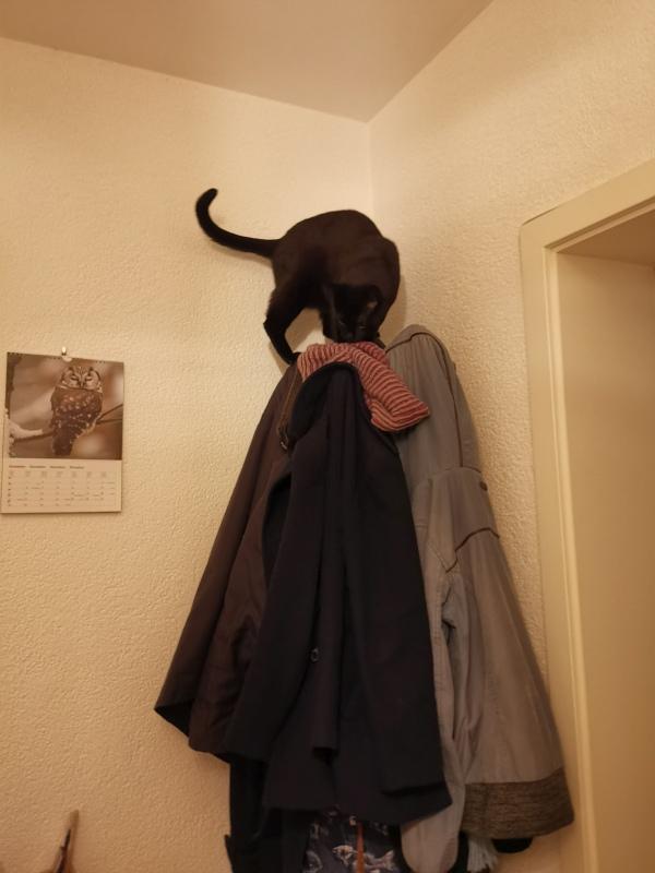 Katze auf Kleiderständer