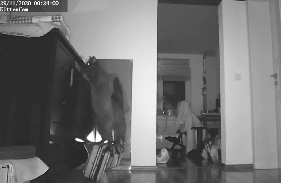Katze an Schublade