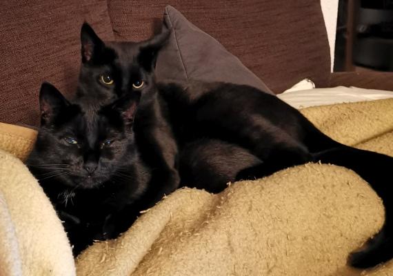 Zwei Katzen auf dem Sofa