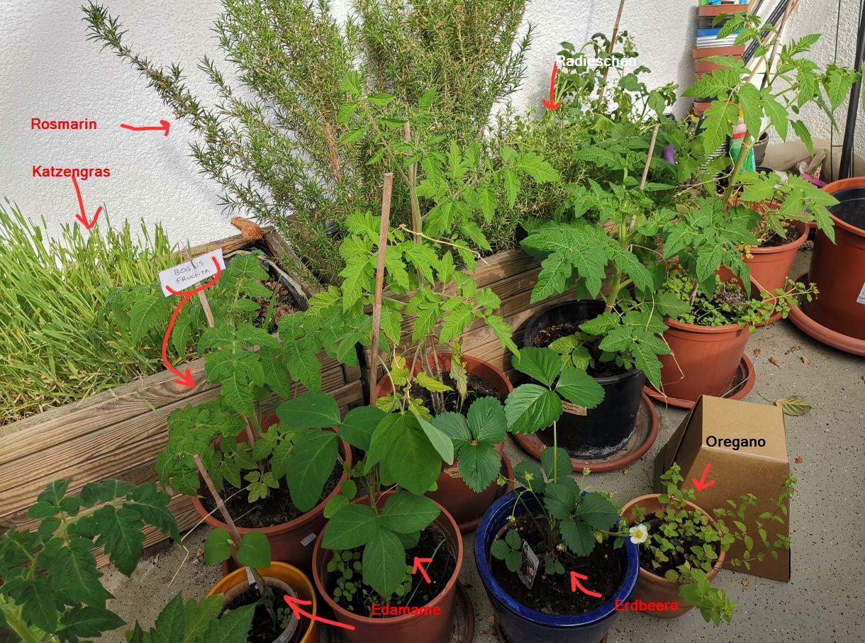 Tomaten, Edamame, Radieschen, Rosmarin, Katzengras