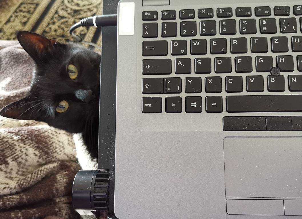 Kater schaut unter Laptop hervor