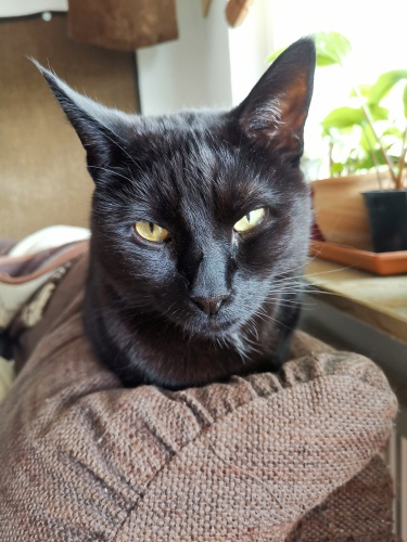 Schwarze Katze auf Sofalehne