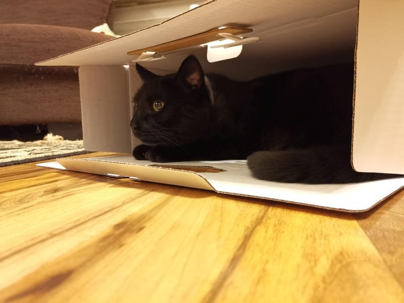 Katze im Playstation-Karton