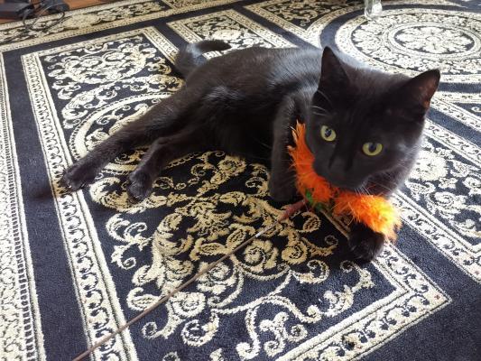 Katze mit orangem Spielzeug