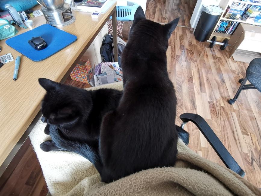 2 Katzen auf dem Schoß